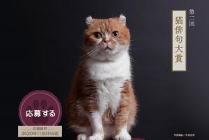 第二回猫俳句大賞投句募集スタート